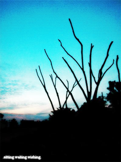 waitingtree2